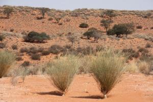 Southern African Desert
